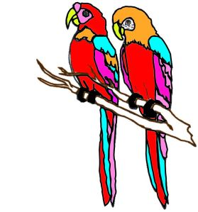 The parrots I painted over!