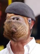 Hynamen walrus